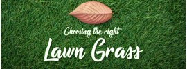 Choosing the Right Lawn Grass