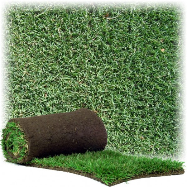 Instant Turf HG Santa Ana Couch (per metre)
