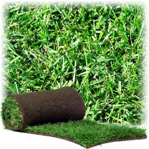 Instant Turf Tall Fescue (per metre)
